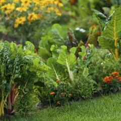 Gardening in HamOnt Locals gather to learn how to grow their own garden and promote sustainability