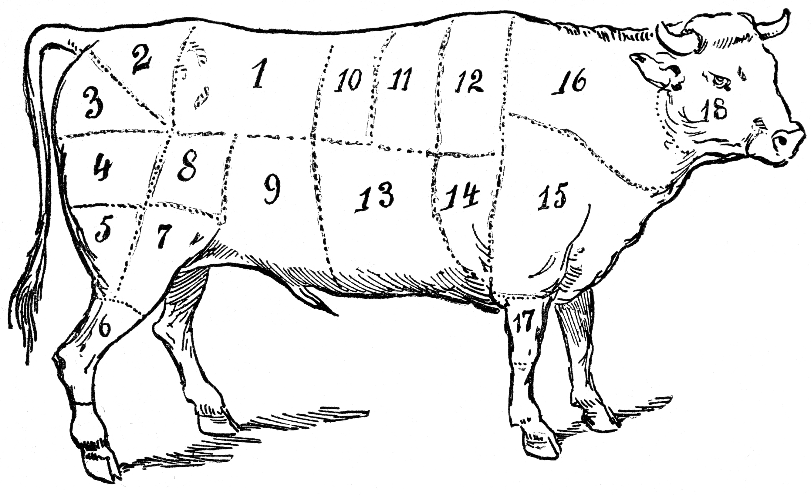 Prints For The Kitchen Print With Different Cuts Of Cow Beef Chart Poster Pig Butcher together with Butchery Logo together with Goat Meat Cuts Diagram furthermore 379356109 Shutterstock Set Of Animal Cuts For Butcher S Shop additionally Cow Butcher Diagram Cut Beef Set 480382762. on pork butcher chart meat cuts